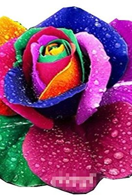 Etsynet-100Rare-Rainbow-Rose-Flower-Seeds-Your-Lover-Multi-color-Plants-Home-Garden-0